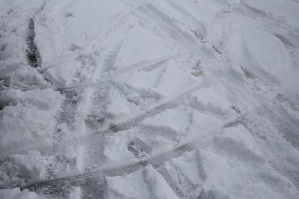 5cmほど雪が降り積もった