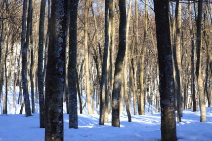 冬の美人林らしくなかった