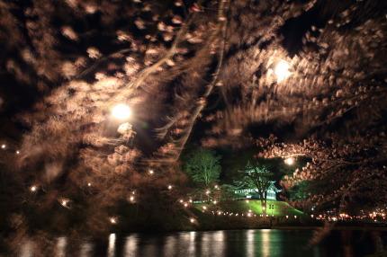 高田城と桜
