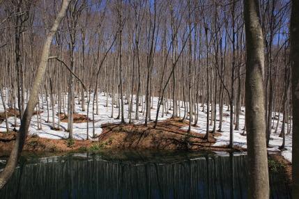 春が始まった美人林
