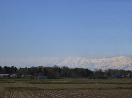 田植え前の田と桜と妙高山
