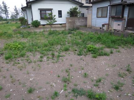空き地に草がたくさん生えてきました