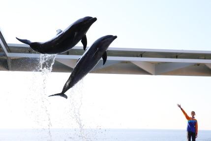 ドルフィンパフォーマンス Rhythm Of Dolphin