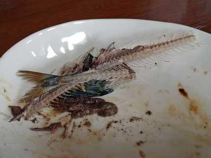 骨になった秋刀魚