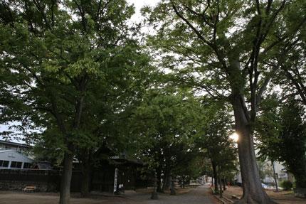 八坂神社 秋葉神社