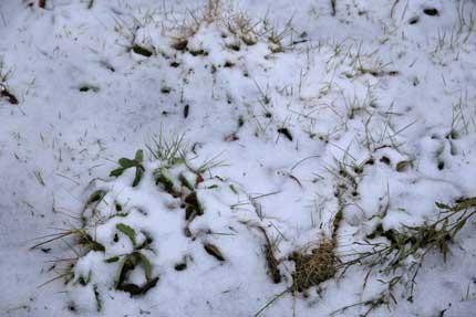 薄らと積もった雪