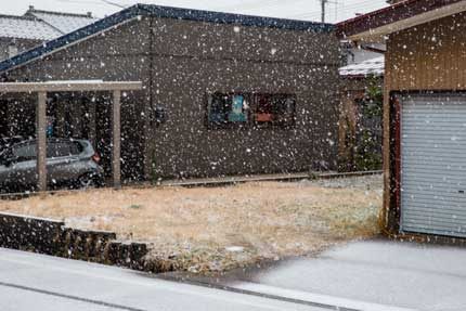 雪らしい雪が降ってきました