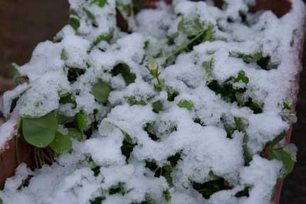 これ位の雪