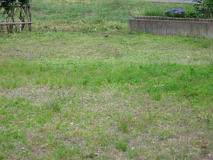 草刈りと重曹水除草