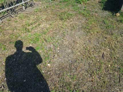 重曹水除草の効果