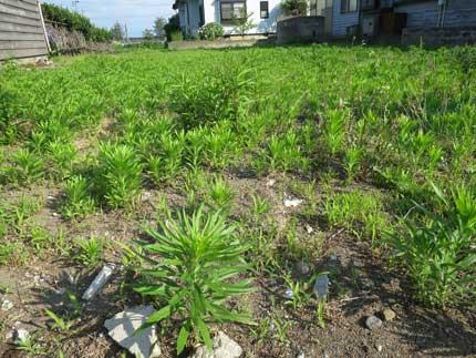 雑草がたくさん生い茂っていました