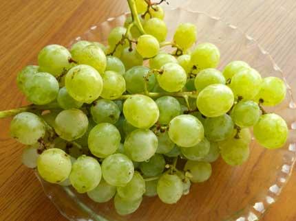 多摩ゆたかという種類の葡萄