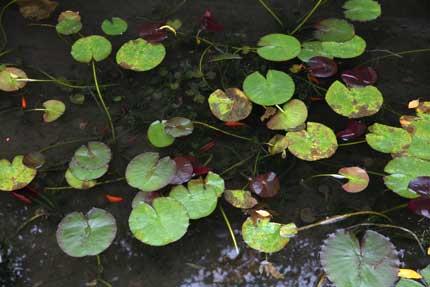 小布施堂さんの前の池