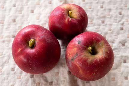 小さい林檎をプレゼント
