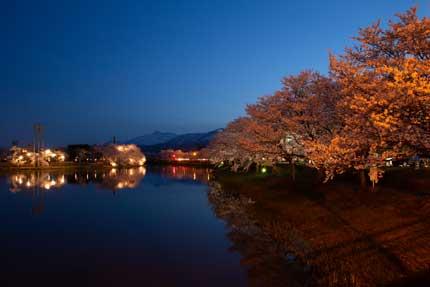 西堀から見る妙高山と桜