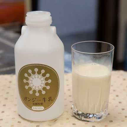 ガンジー牛乳500ml、600円税込