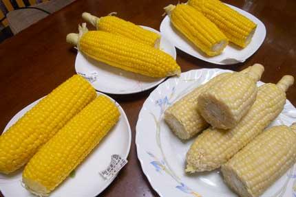 4種類の玉蜀黍