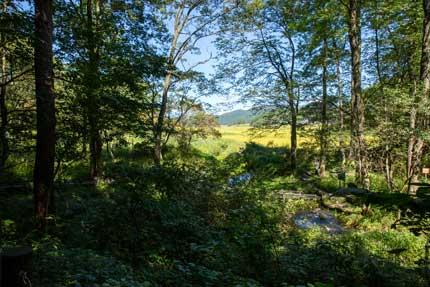 自然のままの姫川源流