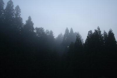 朝靄の美人林入り口