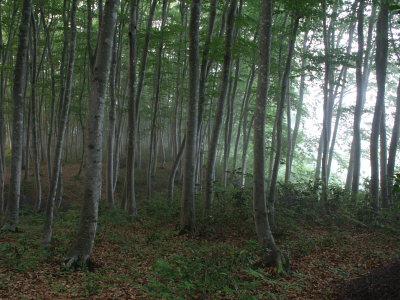 朝靄と美人林