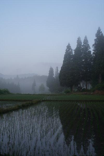 美人林外の朝靄