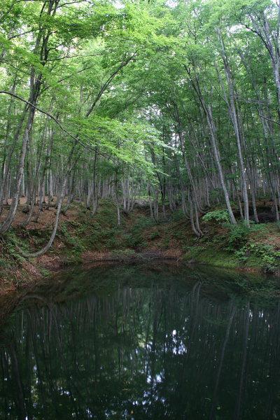 池と美人林