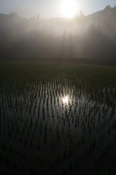 田舎の朝日