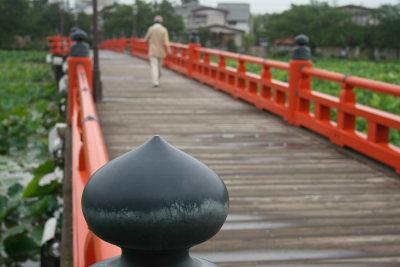 散歩する人が多い高田城址公園