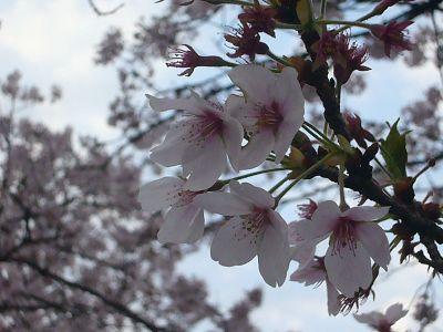 葉桜の一分