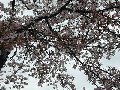 葉桜三分かな