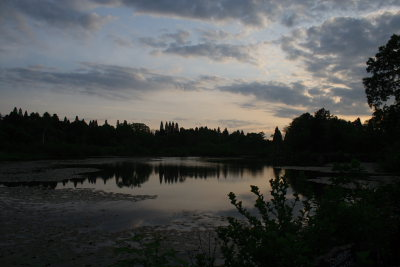 朝日に輝くいもり池