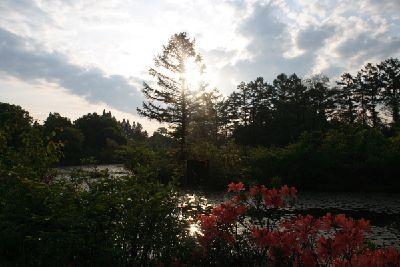 朝日を浴びたいもり池