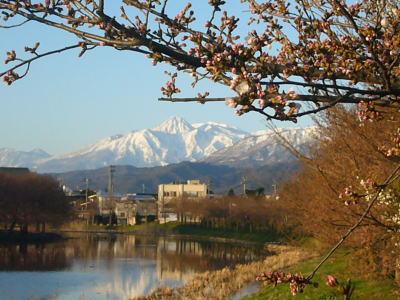 妙高山と桜20070404
