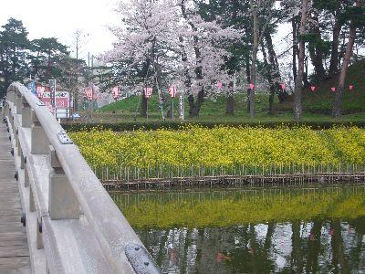 高田城址公園の菜の花20070416