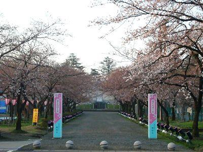 高田城址公園さくらロード20070407