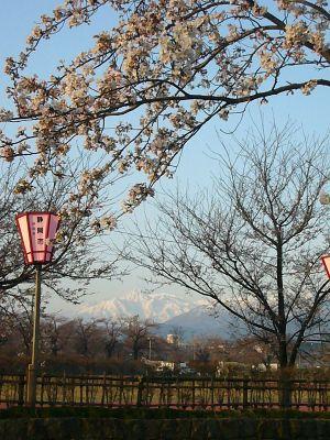 妙高山とサクラ20070407