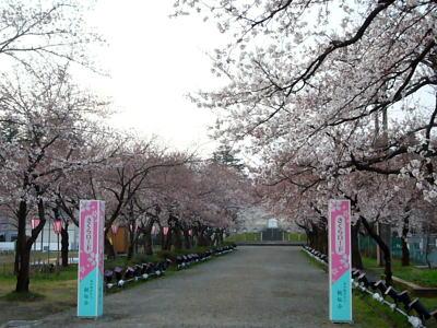 さくらロードの桜20070408