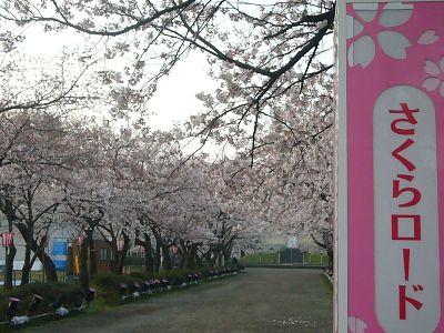 高田城址公園の桜サクラさくら20070410