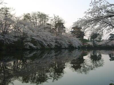 高田城址公園の桜サクラさくら20070412