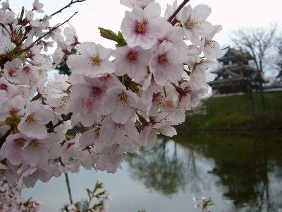 高田城址公園の桜サクラさくら20070416