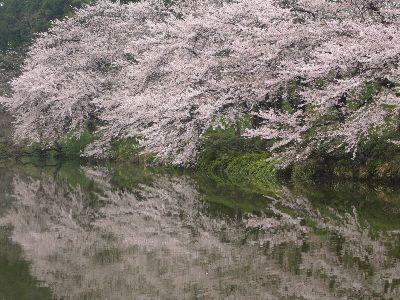 高田城址公園の桜サクラさくら20070418