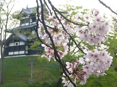 高田城址公園の桜サクラさくら20070422