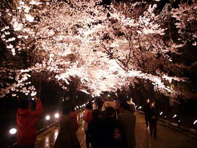 高田城址公園の夜桜20070411